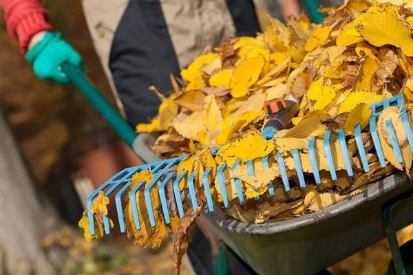 Oktobrī Ludzā sāksies akcija Tīrības dienas